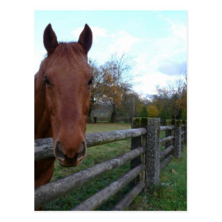 Friendly Horse by the Fence Postcard