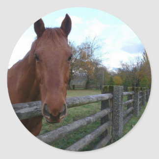 Friendly Horse by the Fence Round Sticker