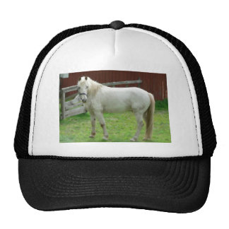 FRIENDLY HORSE HATS