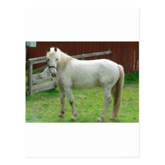 FRIENDLY HORSE POSTCARD