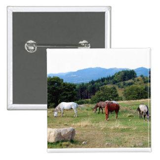 FRIENDLY HORSES PIN