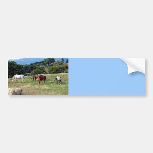FRIENDLY HORSES BUMPER STICKERS