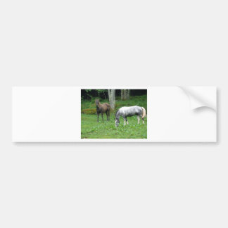 FRIENDLY HORSES BUMPER STICKER
