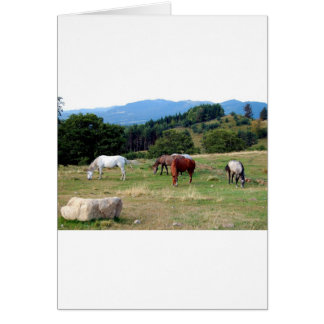 FRIENDLY HORSES GREETING CARD