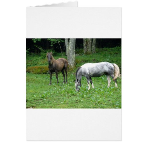 FRIENDLY HORSES CARDS