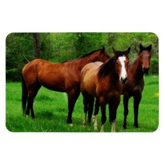 FRIENDLY HORSES RECTANGULAR PHOTO MAGNET