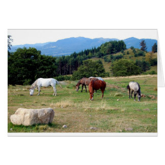 FRIENDLY HORSES GREETING CARD