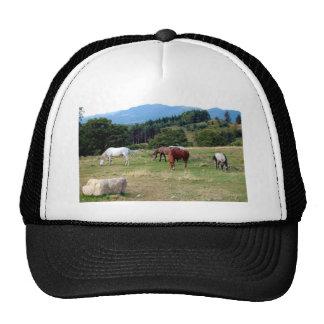 FRIENDLY HORSES HAT