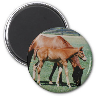 FRIENDLY HORSES REFRIGERATOR MAGNETS