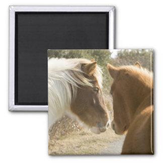 FRIENDLY HORSES FRIDGE MAGNET