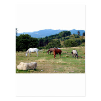FRIENDLY HORSES POSTCARD