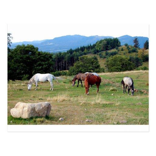 FRIENDLY HORSES POST CARD