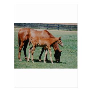 FRIENDLY HORSES POSTCARDS