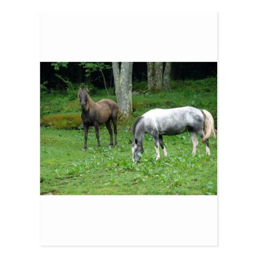 FRIENDLY HORSES POST CARDS