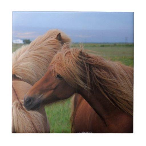Friendly Icelandic Horses Ceramic Tile