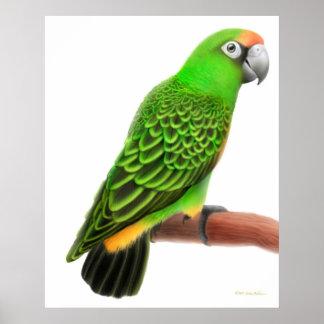 Friendly Jardines Parrot Print
