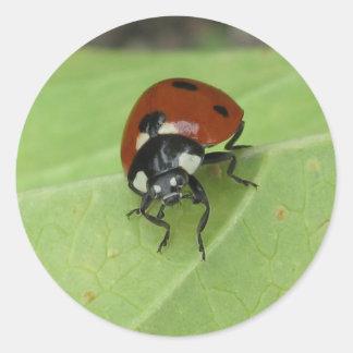 Friendly Ladybug Sticker
