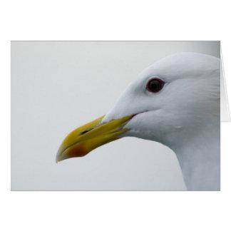 Friendly Seagull? Card