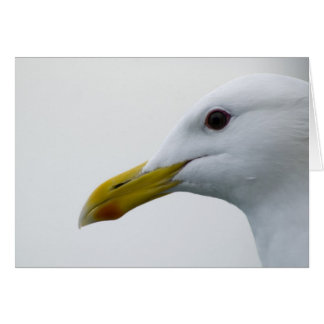 Friendly Seagull? Greeting Card