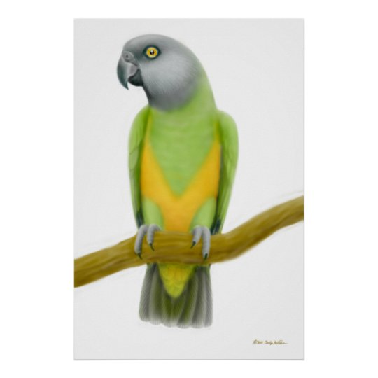 Friendly Senegal Parrot Print