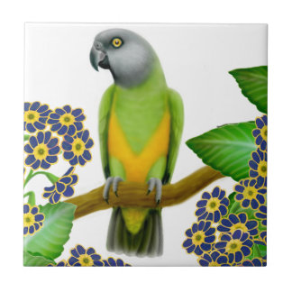 Friendly Senegal Parrot Tile