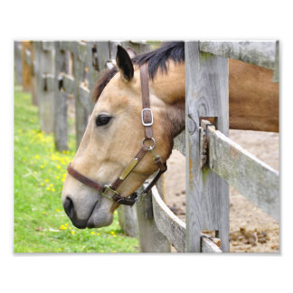 Friendly Tan Horse Photographic Print