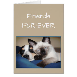 FRIENDS FOREVER OR Fur-ever Dog & Cat Humor Greeting Card