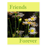 Friends Forever Post Card