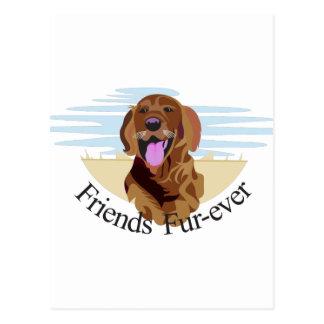 Friends Fur-Ever Postcard