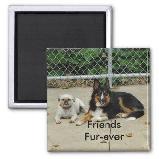 Friends Fur-ever... Square Magnet