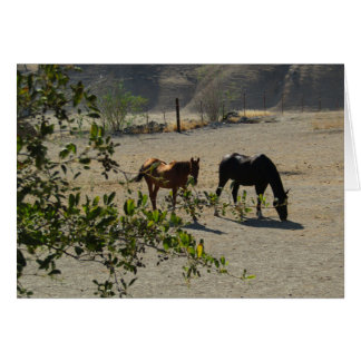 Friendship Card: Horses in San Miguel, California Greeting Card