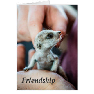 Friendship - FKMP Seasons Greetings Greeting Card