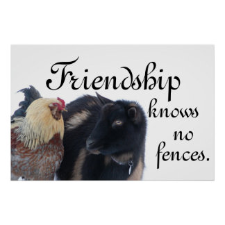 FRIENDSHIP KNOWS NO FENCES - GOAT - ROOSTER POSTER
