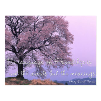 Friendship Quote 1 - Cherry Blossom Tree Postcards