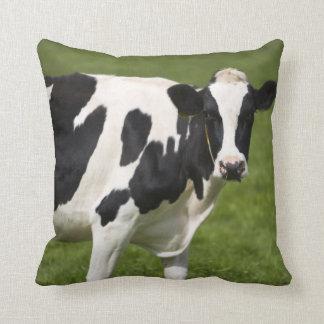 Friesian cow throw pillow