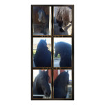 Friesian DIAMOND - Rack/Postcard Full Color Rack Card