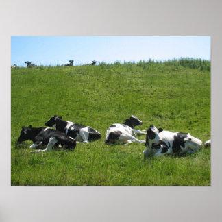 Friesian Holstein Cows in Friesland/ Fryslan Poster