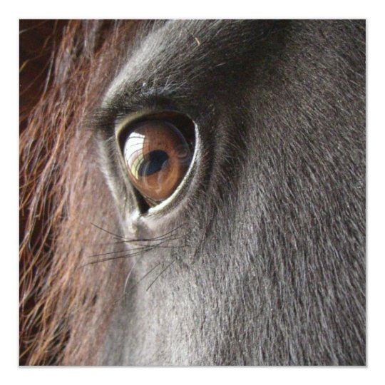 Friesian Horse Eye Invitation