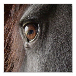 Friesian Horse Eye Poster Print
