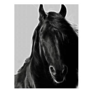 Friesian Horse profile Post Card