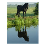 Friesian Horse Reflection in water