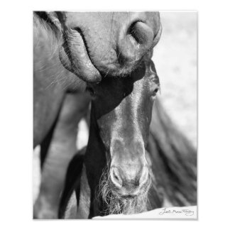 Friesian mare and foal (black and white) photo print