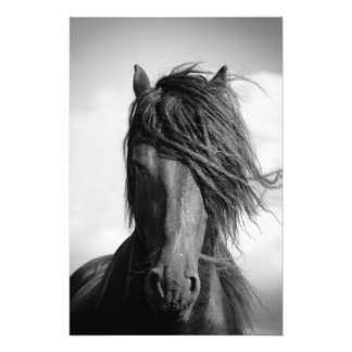 Friesian stallion in the wind. art photo