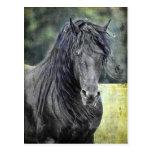 Friesian Stallion Postcards