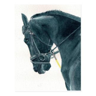 Friesian X Horse 2 Postcard