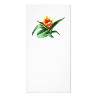 Frilly Orange Tulip Personalized Photo Card