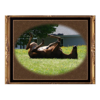 Frisky Foal ~ postcard
