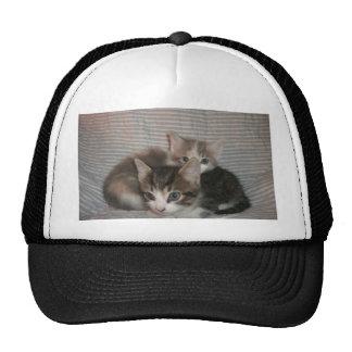 Frisky Kitties Trucker Hats
