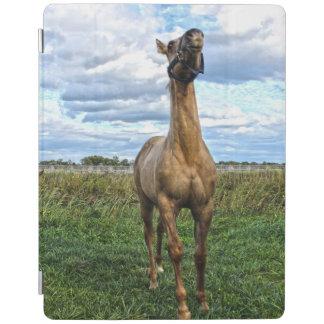 Frisky quarter horse iPad cover