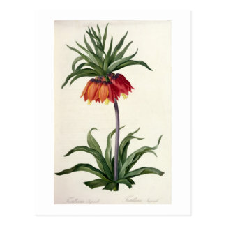 Fritillaria Imperialis from, `Les Lilacees', 1802- Postcard